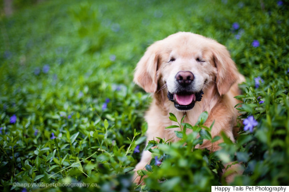 o-SMILEY-BLIND-RETRIEVER-570