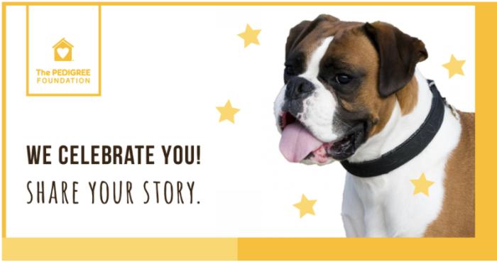 storydog