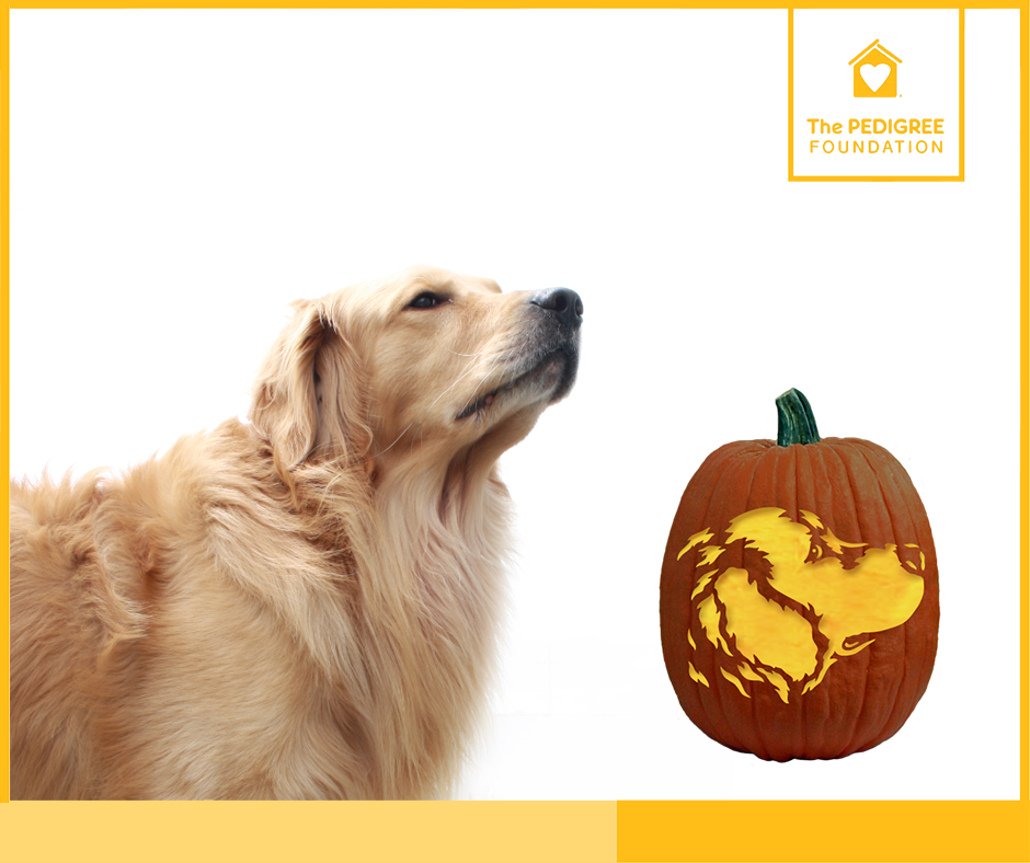 Puppy pumpkin carving stencils pedigree foundation