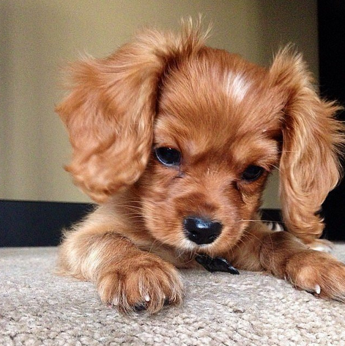 7 Places to Puppy Proof Your Home - PEDIGREE Foundation Cute Puppies