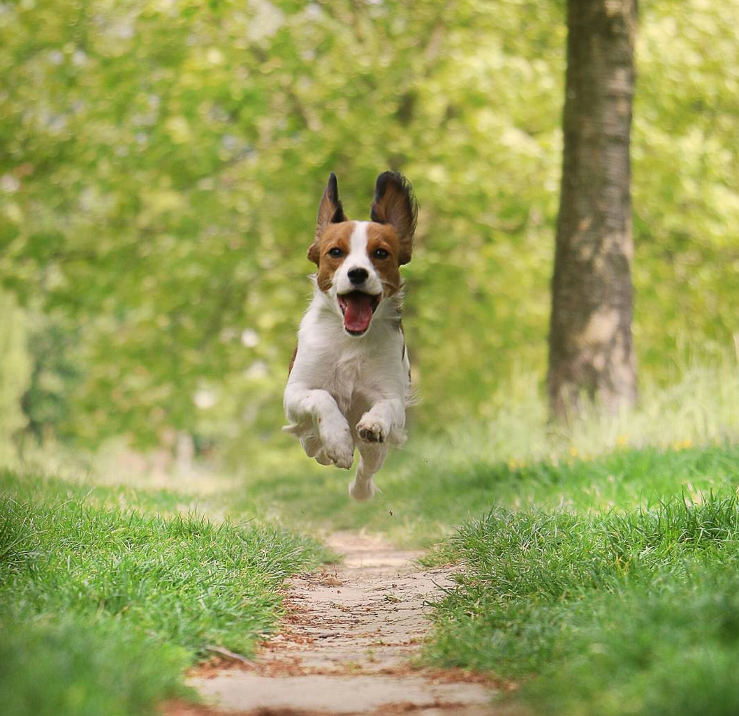 Does Owning A Dog Make You Happier