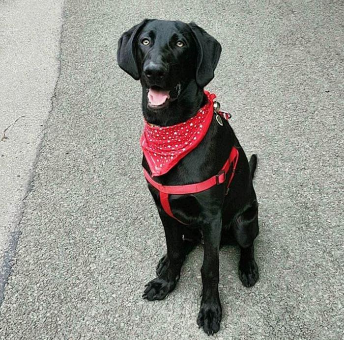 Dog sporting a bandana