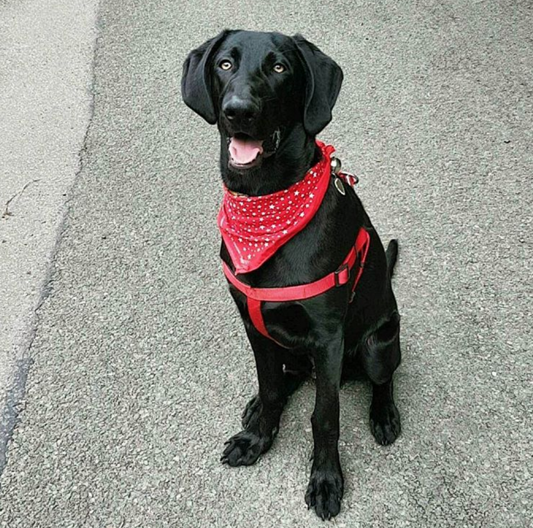 Dog sporting a bandana