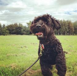 Cute dog in a field