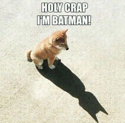 Dog thinks he's Batman