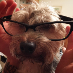 Image of dog wearing glasses
