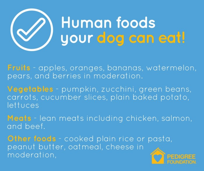 Human foods your dog can eat graphic