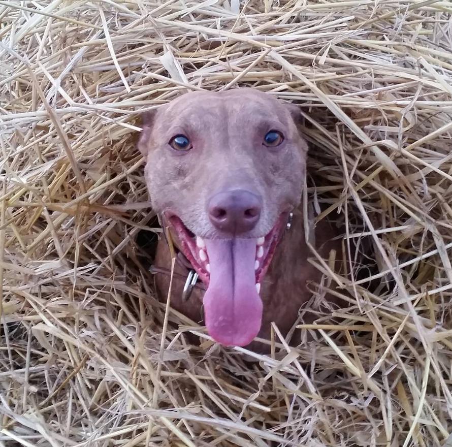 Dog in a haystack
