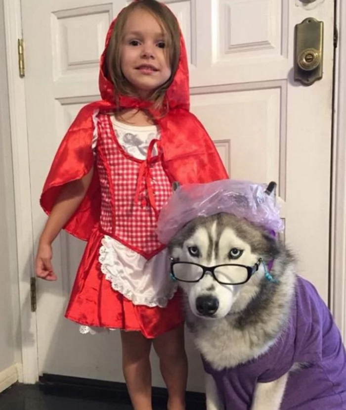 Big bad wolf dog costume