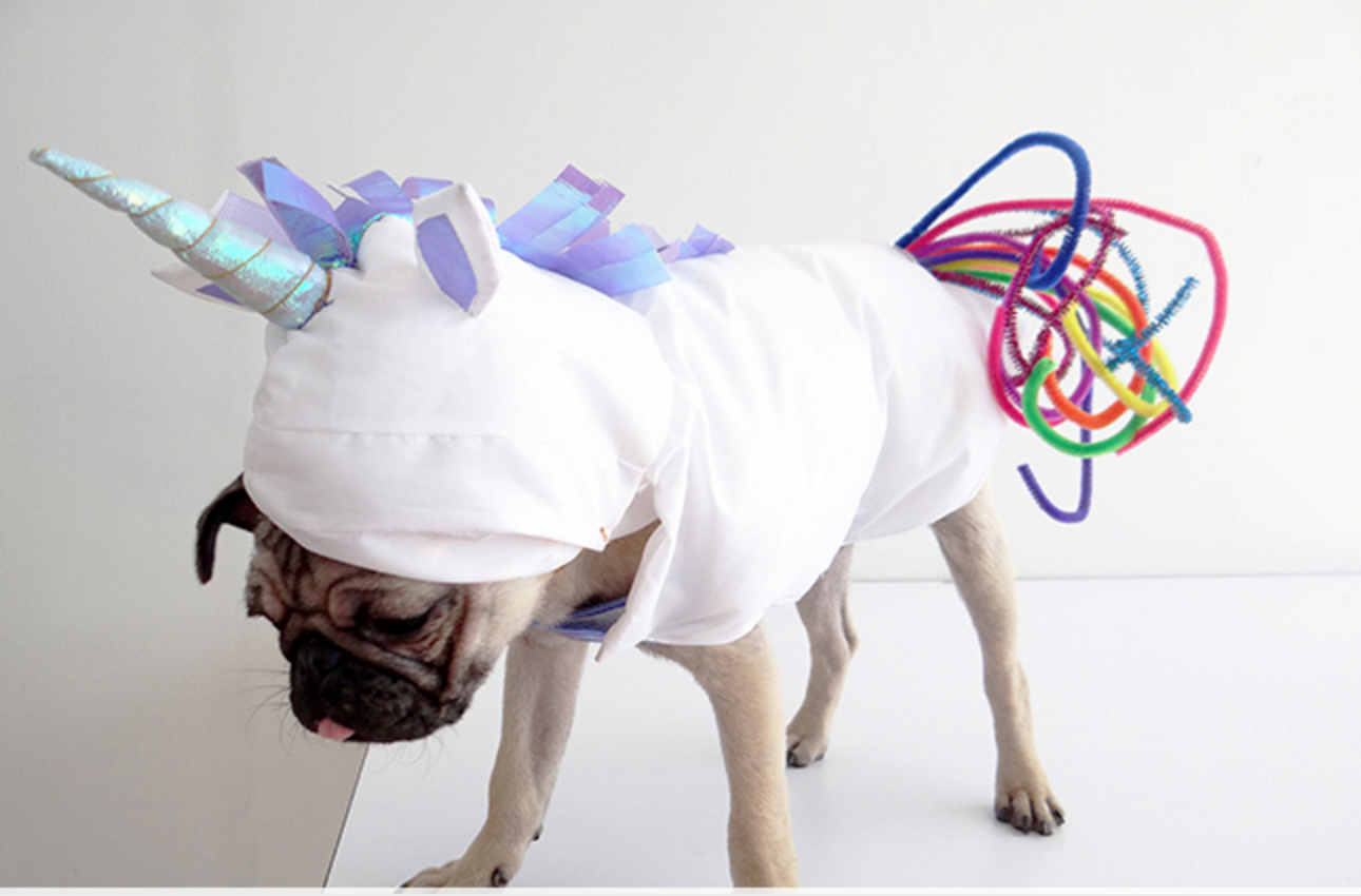 fun halloween costume ideas for your pup! - pedigree foundation