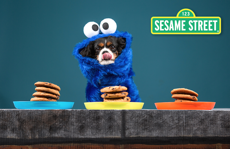 cookie monster dog costume & The Best DIY Dog Costumes for Halloween - PEDIGREE Foundation