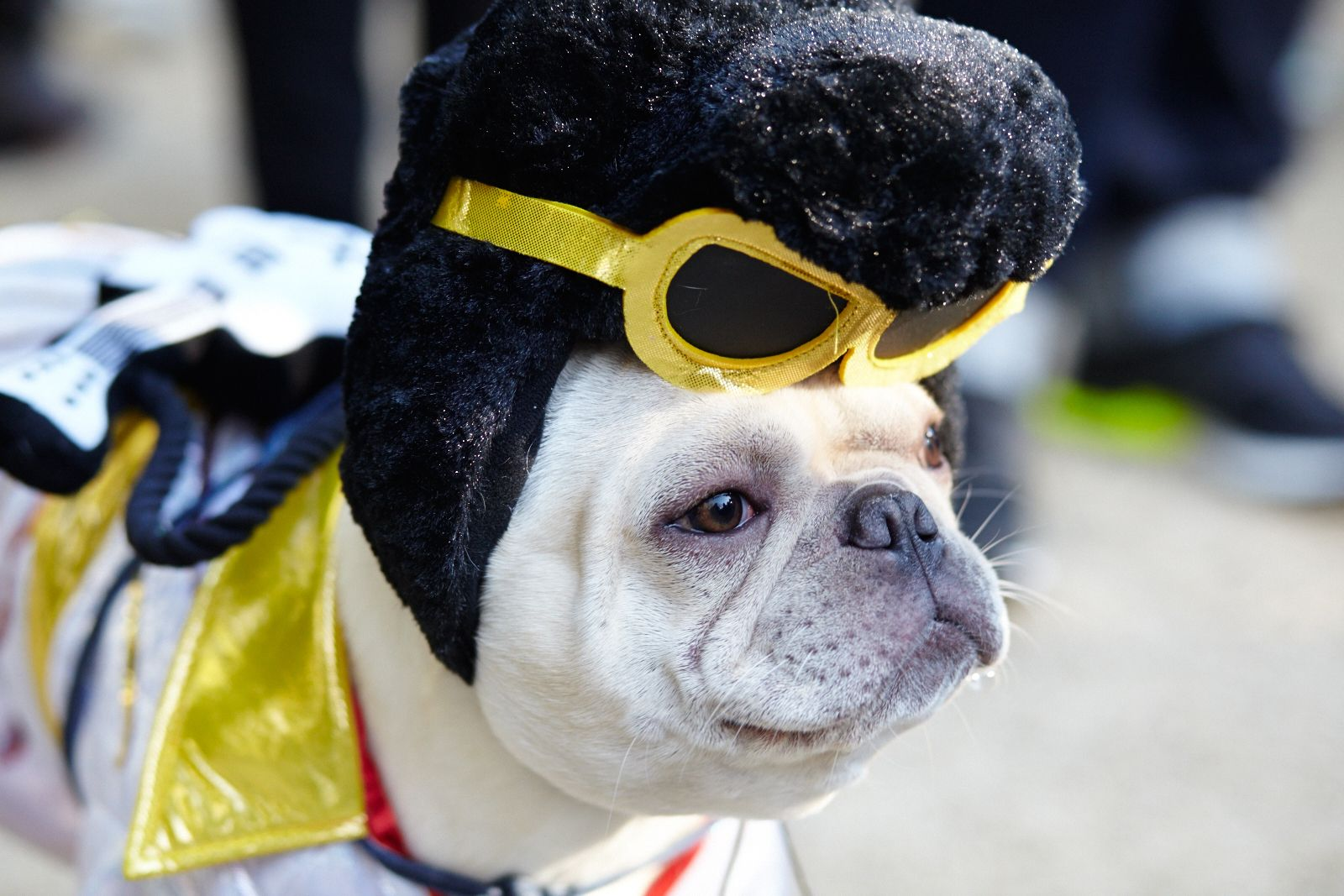 elvis dog costume. u201c & The Best DIY Dog Costumes for Halloween - PEDIGREE Foundation