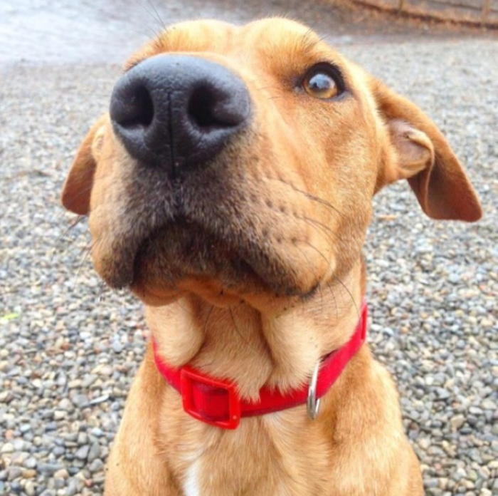 Image of dog with a red collar