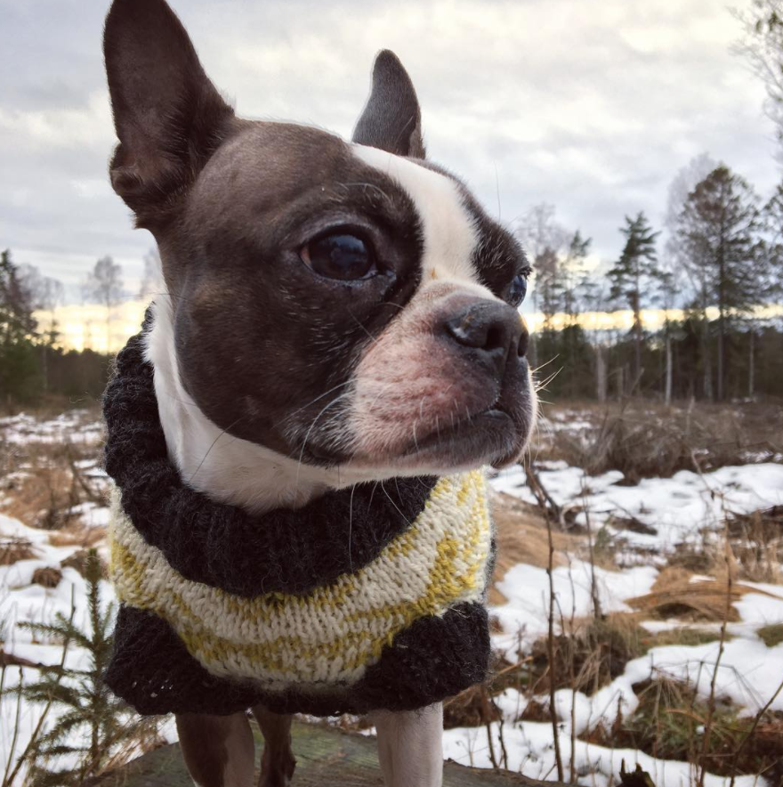 How Cold is Too Cold for Your Dog? - PEDIGREE Foundation