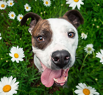 happy dog outside among flowers