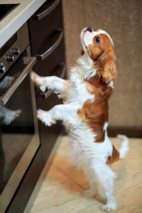 curious dog in kitchen near stove