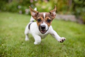 dog running outside