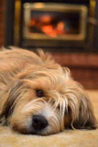 dog near fire place at home