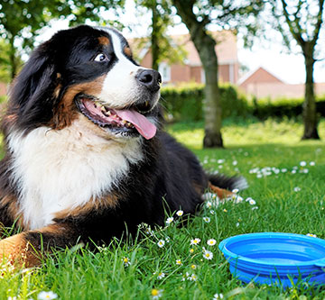 dog outside with water bowl