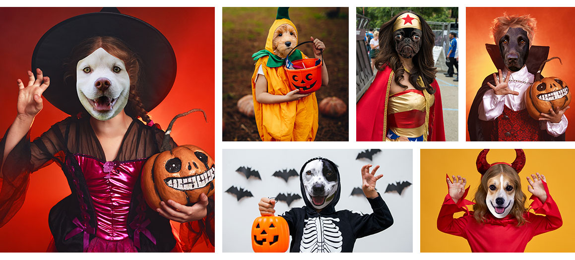 collage of dog halloween portraits
