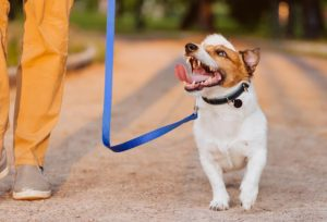 happy dog on a walk