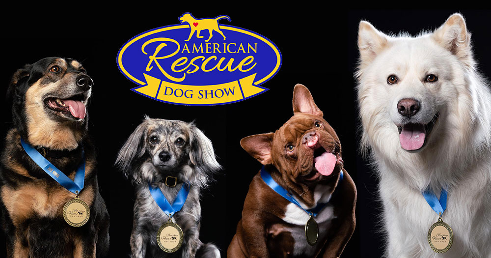 Dogs with their medals