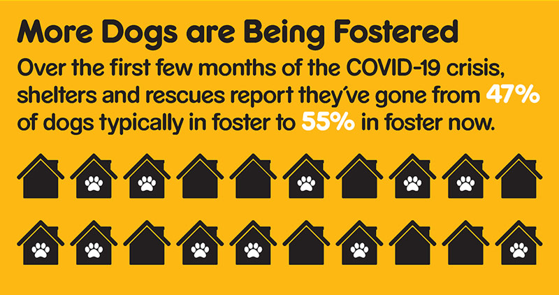 Graphic showing that shelters have gone from 47% of dogs typically in foster to 55%