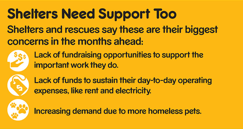 Graphic showing that shelters name as their biggest concerns lack of fundraising opportunities, lack of funds and increasing demand