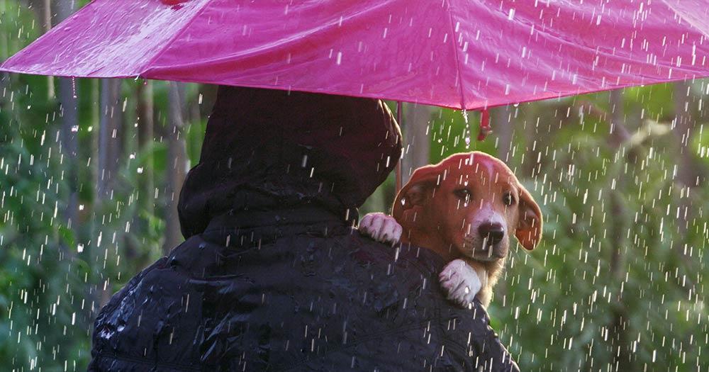 dog with owner under umbrella