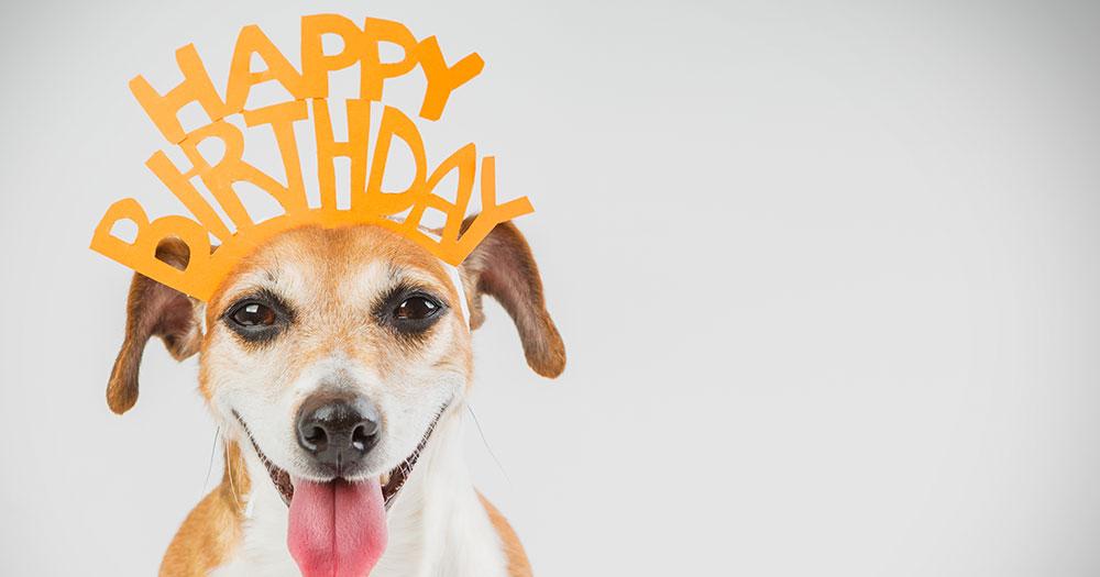 dog wearing happy birthday crown