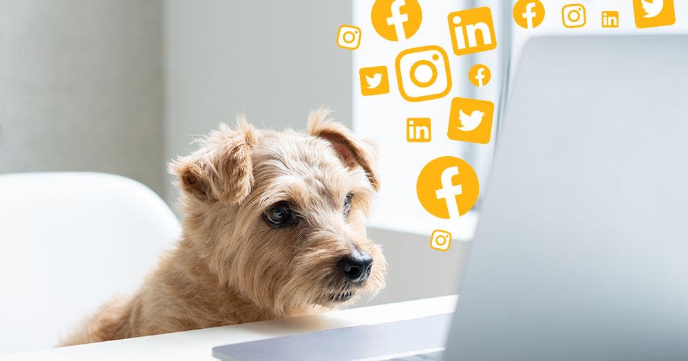 dog looking at computer with social media
