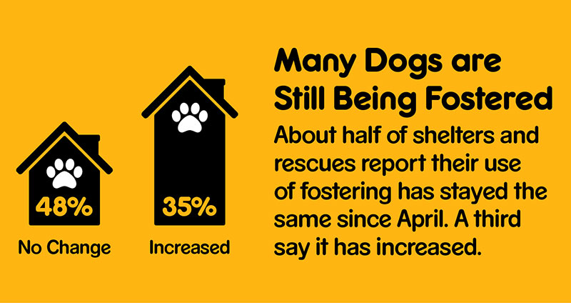 Graphic showing about half of shelters say their use of fostering is unchanged from April to August 2020.