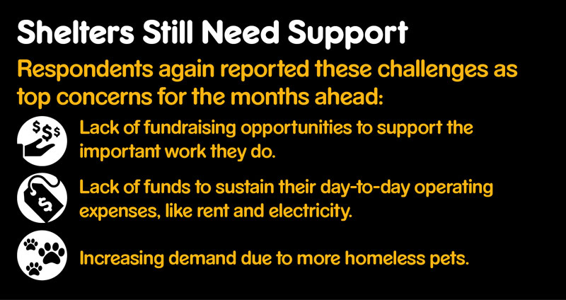 Graphic showing key concerns for shelters such as lack of fundraising opportunities.