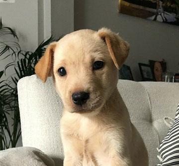 rescued dog looking at camera