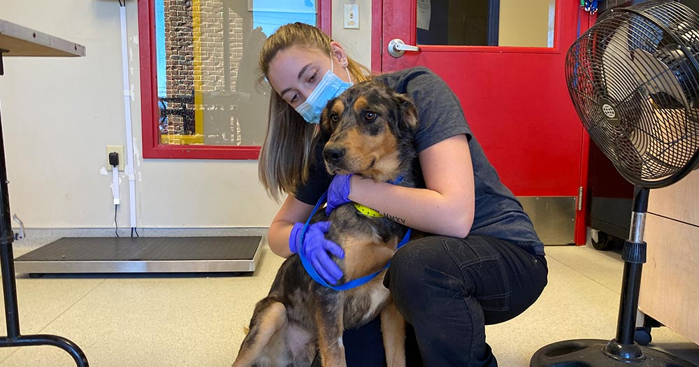 Dog getting hug at adoption center