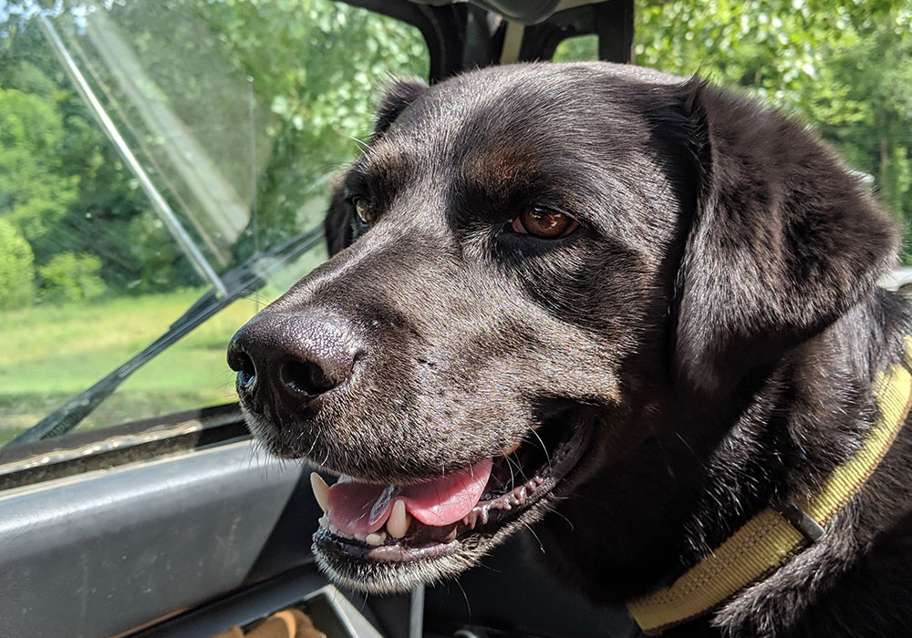 Ray, our Rescue Dog of the Year