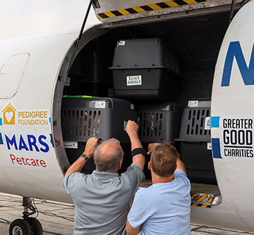 pets are loaded onto a transport plane