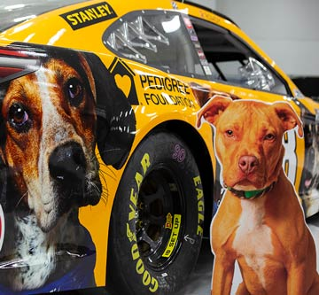 Kyle Busch's No. 18 Toyota Camry with PEDIGREE Foundation logo and a cardboard dog cutout from his pit box