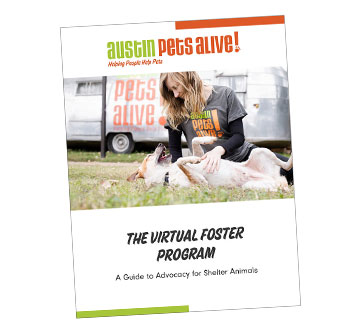 cover of APA! Virtual Foster handbook